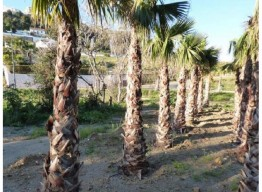 Plot In Benalmadena - homeandhelp.com